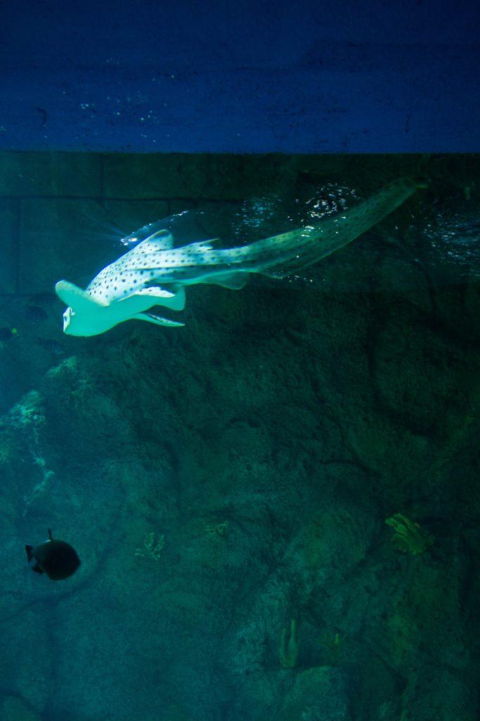 [Floride] Jour 12 : Au revoir la mer, retour sur terre - Partie 1 136
