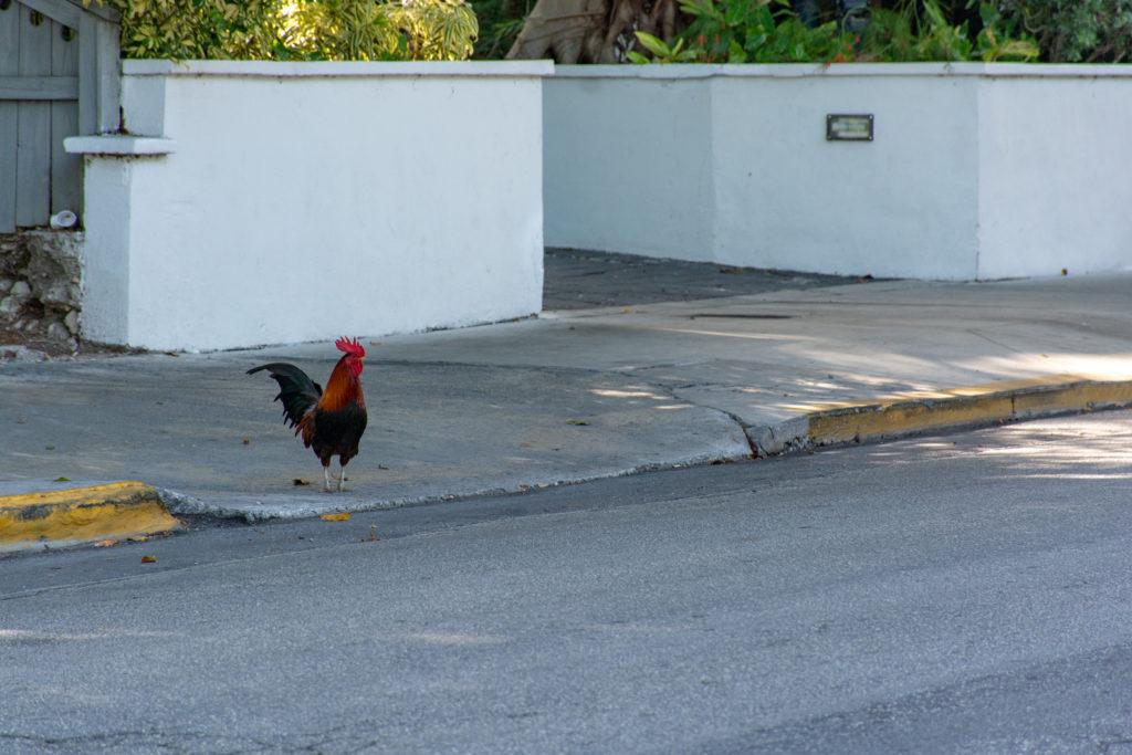 [Floride] Jour 4 : Escale à Key West – Partie 1 26