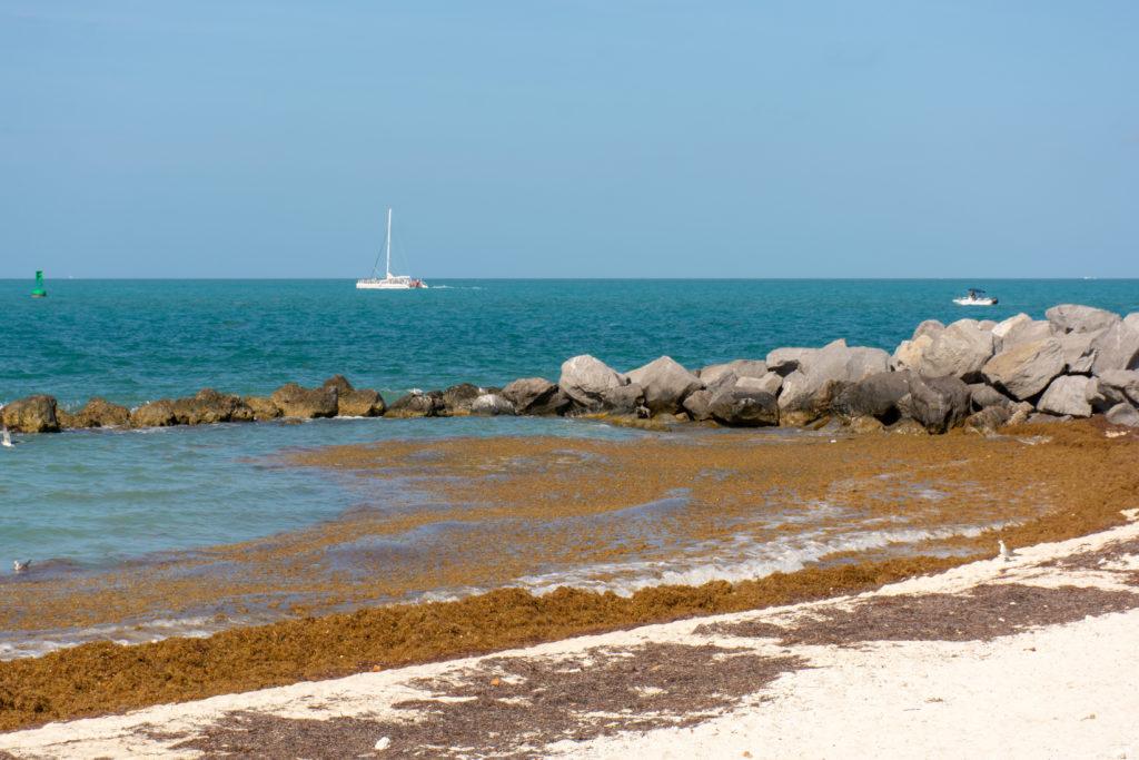 [Floride] Jour 4 : Escale à Key West – Partie 1 40
