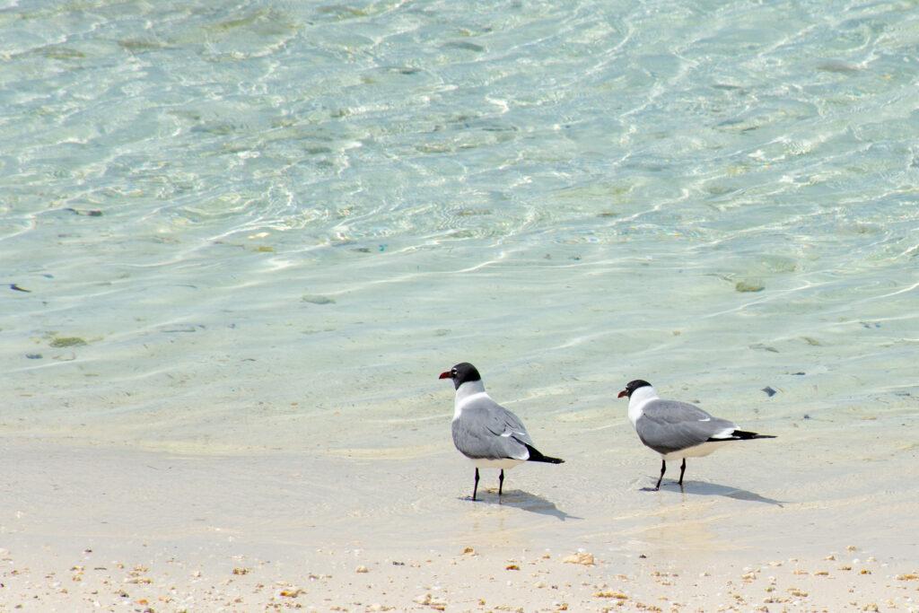 [Floride] Jour 6 : De retour à Castaway Cay – Partie 2 10