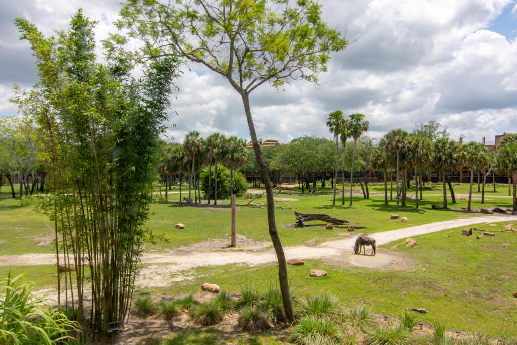 [Floride] Jour 10 : De retour à Animal Kingdom – Partie 2 12