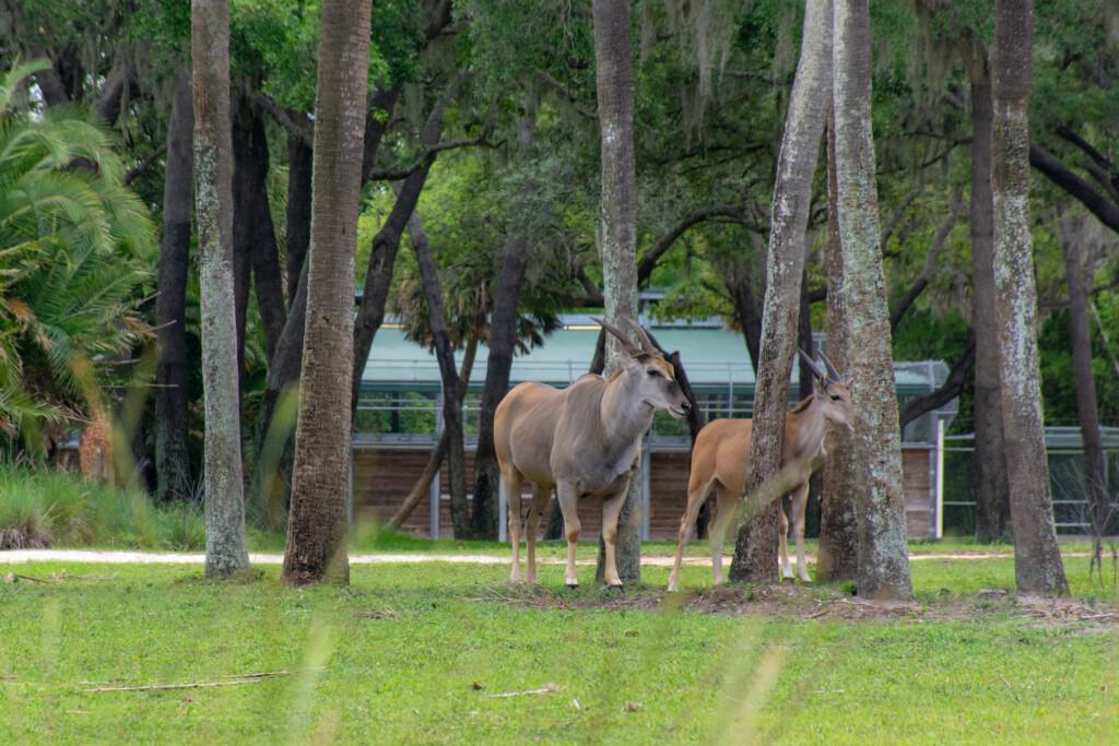 [Floride] Jour 10 : De retour à Animal Kingdom – Partie 2 21