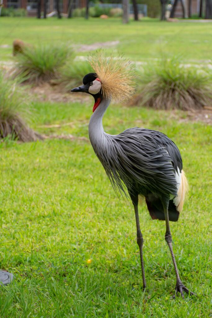 [Floride] Jour 10 : De retour à Animal Kingdom – Partie 2 23