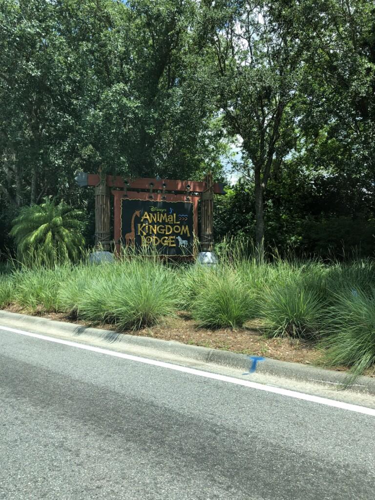 [Floride] Jour 10 : De retour à Animal Kingdom – Partie 2 2
