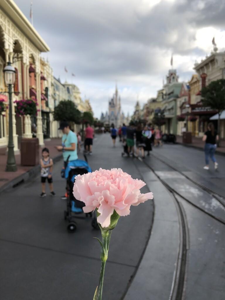[Floride] Jour 12 : Happy Mother's day – Partie 1 7