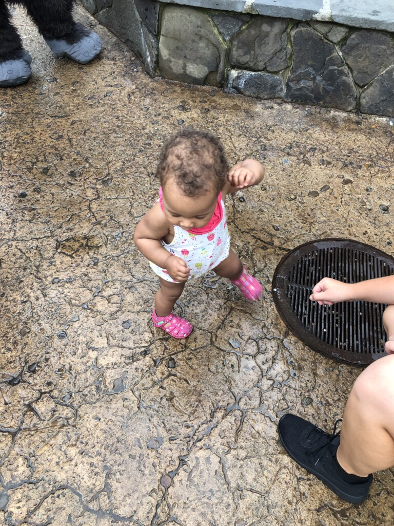 [Floride] Jour 14 : de la savane à Hawaii – Partie 2 5